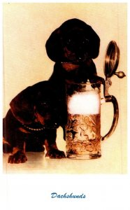 Dog , Dachshunds , having a beer