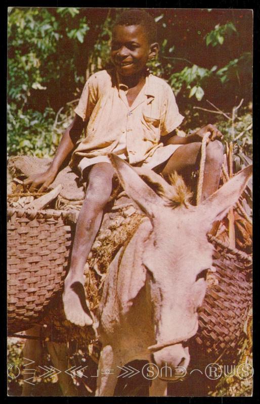 The Little Woodman, Jamaica
