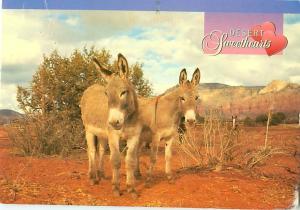 Desert Sweet Hearts Horses Donkeys Burrows Romance Comic  Postcard  # 8099