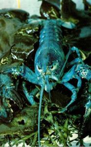 Massachusetts Boiston Central Wharf New England Aquarium Blue Lobster