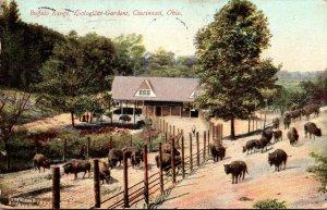 Ohio Cincinnati Zoological Garden Buffalo Range 1910