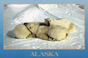 Alaska Arctic A Cuddle Of Cubs
