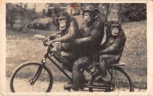 B23882 Budapest Zoo Monkey on Bycicle Cyclisme  singe velo bike comic