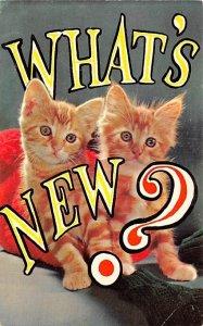 What's New Cat Unused