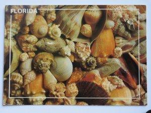 FLORIDA Shell Collection **Unused** Vintage Chrome Postcard