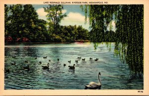 Indiana Indianapolis Riverside Park Swans On Lake Reginald Sullivan