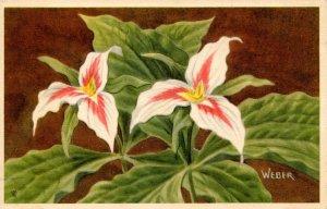 Painted Trillium    Artist: Weber