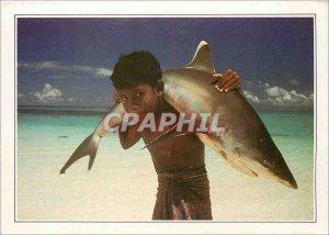Postcard Modern Maldives Islands Maldives has white tip shark