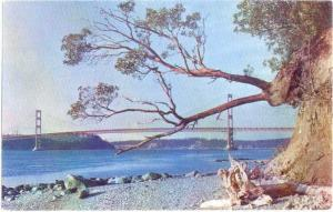 View of The Narrows Bridge Tacoma Washington WA
