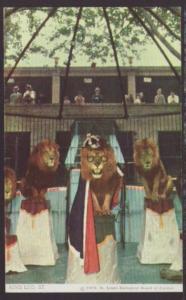 King Leo the Lion,Lion Act,St Louis Zoo,MO Postcard