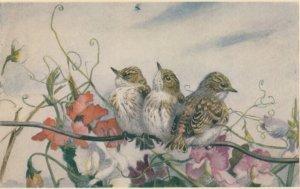 AS: Winifred AUSTEN : Flycathers , 1940-50s