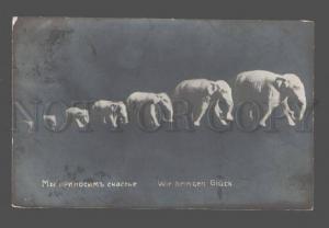 083412 FUNNY Happy ELEPHANT Figures Vintage PHOTO PC