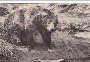 Alaska Brown Bear American Museum Of Natural History New York City