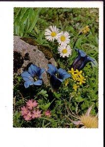 Photo of Wild Flowers,