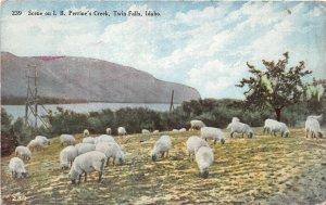 H83/ Twin Falls Idaho Postcard c1910 I.B. Perrine's Creek Sheep 55