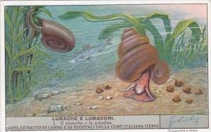 Liebig S1417 Slugs &  Snails No 2 Il planorbe e la paludina