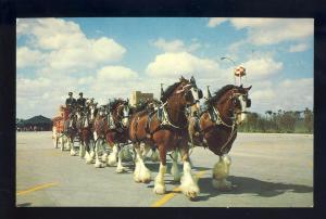 Los Angeles, California/CA Postcard, Budweiser Clydesdale -Horse Team, Busch