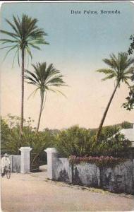 Bermuda Date Palms 1935