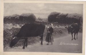 RP: Translucide [See-through] PC; Girl & Cows, La Vieaux Champs., France, 00-10s