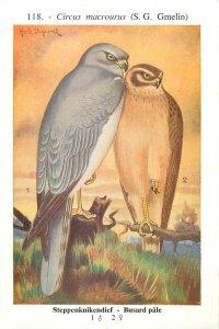 Birds of Belgium by Hub Dupond Pallid harrier Bird