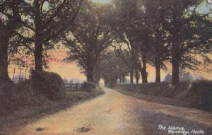 Wormley The Avenue  Hertfordshire Antique Postcard