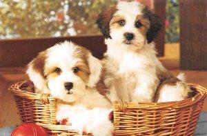 Puppies Dog Unused