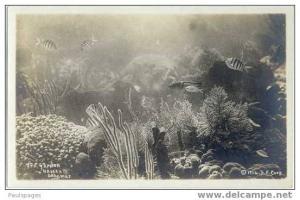 RPPC Sea Garden, Nassau, Bahamas by S.F. Corp. Copyright 1914
