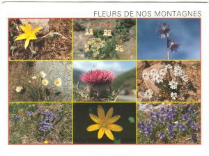 France, Fleurs de nos Montagnes, 1996 used Postcard