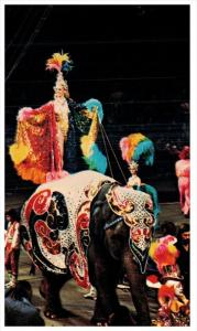 12236  Ringling Bros. Barnum Bailey Circus - Elephant Glamour Abounds