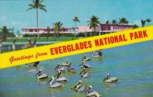 Florida Greetings From Everglades National Park Showing Flamingo Visitors Cen...