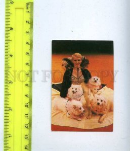 259690 USSR Circus trainer DOGS Lapdogs Dzitra Gilde Pocket CALENDAR 1984 year