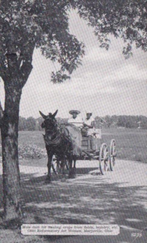 Ohio Marysville Mule Cart For Hauling Crops Ohio Reformatory For Women Dexter...