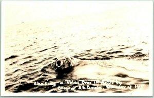 Vintage Real Photo RPPC Postcard Chasing a POLAR BEAR in Arctic / S.S. CORWIN