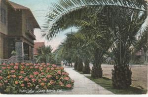 Cedar Avenue at Long Beach CA, California - pm 1907 - DB
