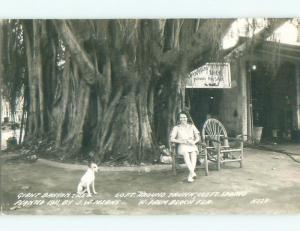 Pre-1950 rppc PICTURES FOR SALE AT GIANT BANYAN TREE West Palm Beach FL W0413