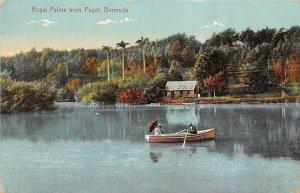 Bermuda Post card Old Vintage Antique Postcard Royal Palms from Paget Postal ...