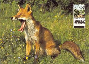 Postcard Stop Illegal Poisoning of Our Wildlife, Fox #806