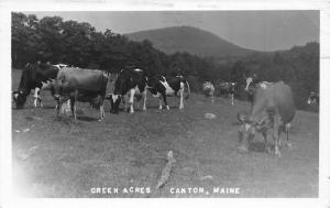 F21/ Canton Maine RPPC Postcard 1950 Green Acres Cow Pasture