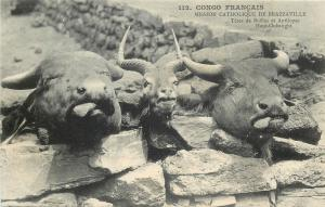 Buffalo and antelope heads French Congo Brazzaville catholic missions postcard