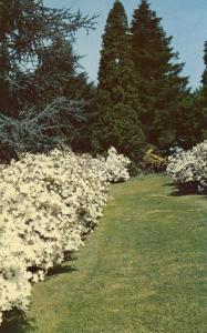 DE - Wilmington. Winterthur Gardens