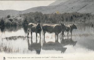 TUCK # 1353; Animal Studies, 00-10s; Cattle in Water