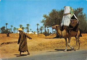 Tunisia Ile de Djerba La Johfa Camel