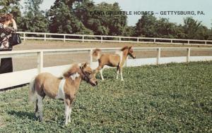GETTYSBURG , Pennsylvania , 50-60s ; Miniature Horses #2