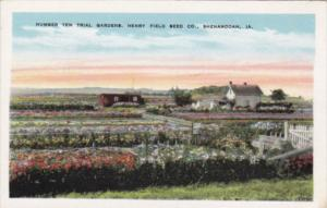 Iowa Shenandoah Number Ten Trial Gardens Henry Field Seed Company