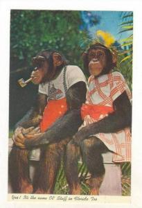 Monkeys (Chimps), Dundee, Florida, PU-1960