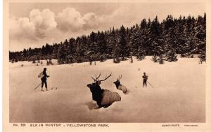 Elk in Winter, Yellowstone National Park, 1914