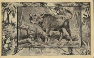 Great White Hunter~African Safari Series~Buffalo~Jungle Border~1909 MJ Mintz
