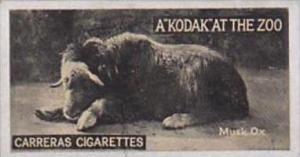 Carreras Cigarette Card Kodak At Zoo 1st Series No 7 Musk Ox