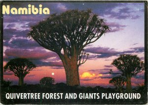 Postcard Africa native ethnic namibia tree of life forrest life