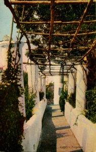 Italy - Capri. Pergola